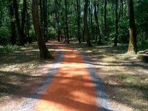Jogging ślad w lesie Obrazy Stock