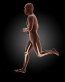 Jogging male medical skeleton Royalty Free Stock Images