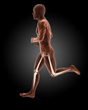 Jogging male medical skeleton Stock Photos
