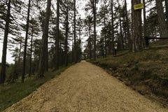 Jogging Mountain Path Royalty Free Stock Photo