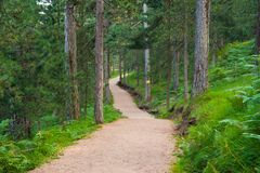 Jogging mountain track in summer Stock Image