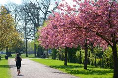 Jogging in the park. Stock Images
