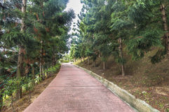 Jogging track Stock Photography