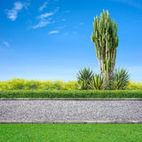 Jogging track. Roadside view, grass and cactus on blue sky Royalty Free Stock Photos