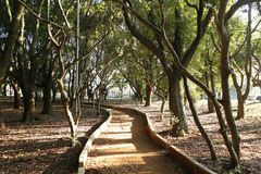 Jogging track between trees Stock Images