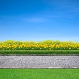 Jogging track and yellow flowers. Roadside view of grass and yellow flowers  on blue sky Royalty Free Stock Image
