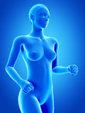 Jogging woman. Medical anatomy of a jogging woman - blue Royalty Free Stock Photo