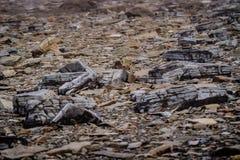 Joggings Fossil, Nova Scotia, Canada. Bay of Fundy, Nova Scotia, Canada. The highest tide in the world stock photos