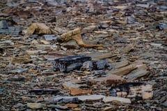 Joggings Fossil, Nova Scotia, Canada. Bay of Fundy, Nova Scotia, Canada. The highest tide in the world royalty free stock photos