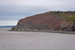 Joggins fossil- klippor, Nova Scotia, Kanada arkivbild