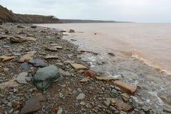 Joggins fossil- klippor, Nova Scotia, Kanada arkivfoto