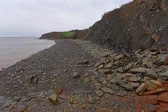 Joggins fossil- klippor, Nova Scotia, Kanada royaltyfria foton