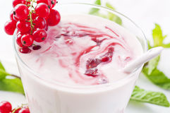 Joghurt with fresh redcurrant Royalty Free Stock Photo