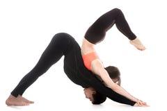 Jogi verbindet in den abwärtsgerichteten Hunde- und Skorpionshaltungen des Yoga Stockfoto