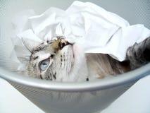 Jogo 2 do gato fotografia de stock royalty free