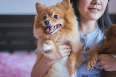 Jogo asiático alegre da jovem mulher e divertimento feliz com seu cão Imagens de Stock Royalty Free