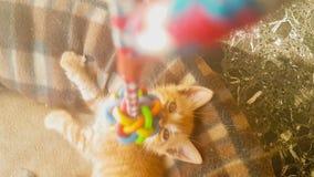 Jogo bonito do gato do bebê feliz com um brinquedo do pêndulo vídeos de arquivo