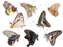 Jogo chinês da borboleta Imagens de Stock Royalty Free