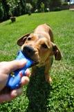 Jogo com cão imagem de stock royalty free