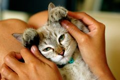 Jogo com gato Fotografia de Stock Royalty Free
