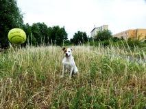 Jogo com o cão imagem de stock royalty free