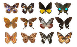 Jogo da borboleta Fotografia de Stock