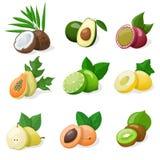Jogo da fruta exótica Ilustração do vetor Fotografia de Stock