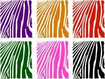 Jogo da pele da zebra da cor do vetor Imagem de Stock Royalty Free
