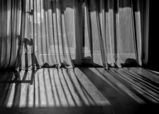 Jogo da sombra com cortina e parquet fotos de stock royalty free