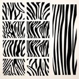Jogo da textura da zebra do vetor Imagens de Stock