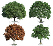 Jogo das árvores isoladas no branco Imagens de Stock Royalty Free