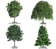 Jogo das árvores isoladas no branco Imagem de Stock