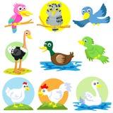 Jogo das aves domésticas Foto de Stock