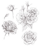 Jogo das flores ilustração do vetor