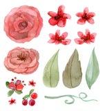 Jogo das flores e das folhas Fotografia de Stock Royalty Free