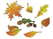 Jogo das folhas de outono imagem de stock royalty free