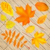 Jogo das folhas de outono ilustração do vetor