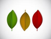 Jogo das folhas de outono coloridas Ilustração do vetor Imagens de Stock Royalty Free