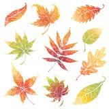 Jogo das folhas do grunge do outono. Acção de graças Fotos de Stock Royalty Free