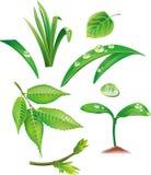 Jogo das folhas e da grama do verde ilustração do vetor
