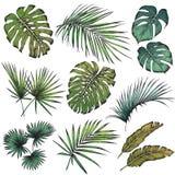 Jogo das folhas tropicais Foto de Stock Royalty Free