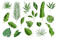 Jogo das folhas tropicais Coleção verde diferente da folha Ilustração colorida do vetor no fundo branco nos desenhos animados Fotos de Stock Royalty Free