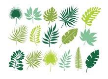 Jogo das folhas tropicais Folha da selva imagens de stock