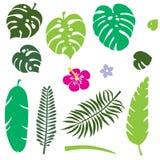 Jogo das folhas tropicais Folha da selva fotografia de stock