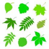 Jogo das folhas verdes Fotografia de Stock