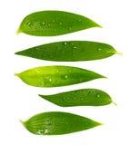 Jogo das folhas verdes ricas Fotografia de Stock