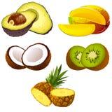 Jogo das frutas ilustração stock