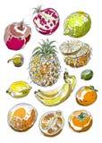Jogo das frutas Desenho da carta branca Imagem de Stock