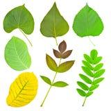Jogo das várias folhas das árvores e das plantas Imagens de Stock Royalty Free