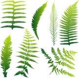 Jogo de 7 ilustrações do fern ilustração do vetor